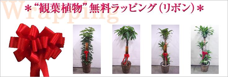 観葉植物用リボン例|フラワーギフト通販ミーム