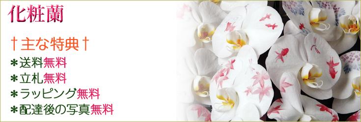 化粧蘭 商品一覧