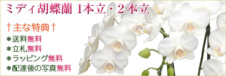 ミディ胡蝶蘭 1本立・2本立 商品一覧ページ
