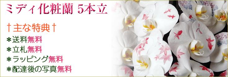 ミディ化粧蘭 5本立 商品一覧