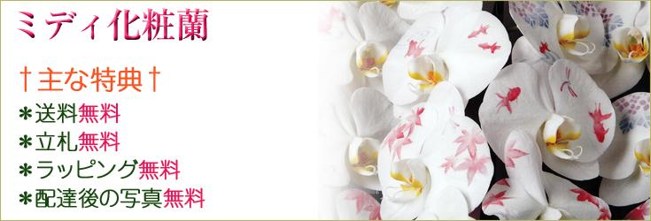 ミディ化粧蘭 商品一覧 商品一覧