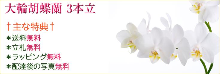 大輪胡蝶蘭3本立 商品一覧|フラワーギフト通販 ミーム