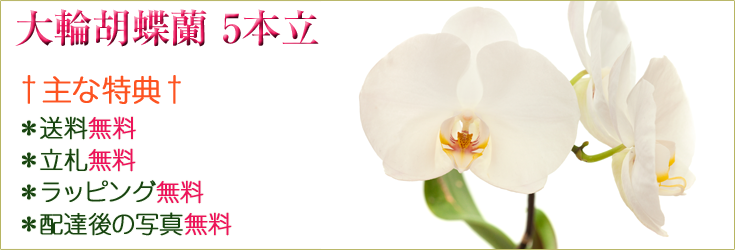 大輪胡蝶蘭 5本立 商品一覧|フラワーギフト通販 ミーム