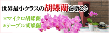 母の日のプレゼントに世界最小クラスの「マイクロ胡蝶蘭」と可憐な「テーブル胡蝶蘭」。商品一覧へ