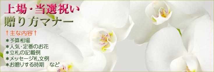 上場祝い・当選祝いの贈り方のマナー 胡蝶蘭、フラワー、観葉植物
