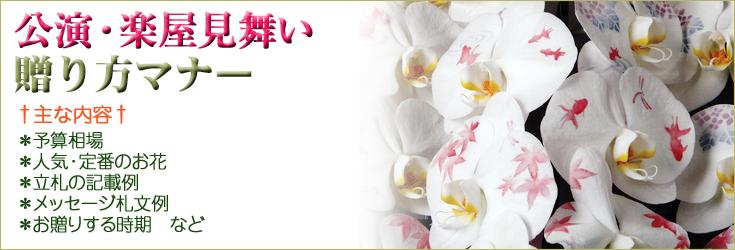 公演祝い・楽屋見舞いの贈り方のマナー 胡蝶蘭、フラワー、観葉植物