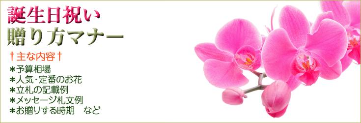 誕生日祝いの贈り方のマナー 胡蝶蘭、フラワー、観葉植物