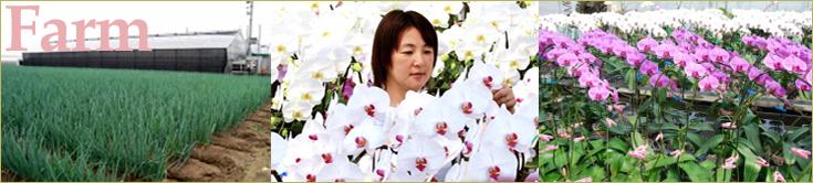 大輪胡蝶蘭 おぎの蘭園の生産地