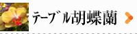 胡蝶蘭 テーブル 商品一覧ページへ