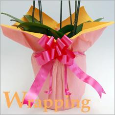 胡蝶蘭とお祝いの花専門店 [フラワーギフト通販ミーム]の無料ラッピングサービス