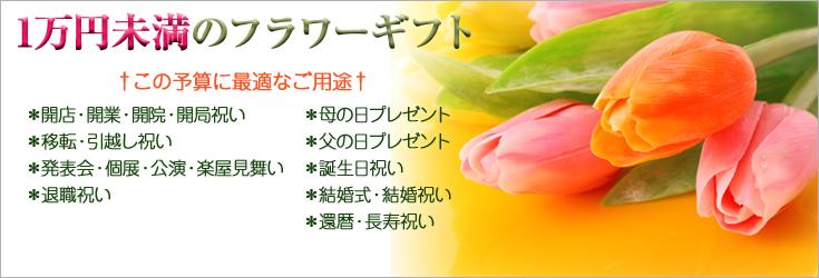 1万円未満のご予算でお選びいただけるフラワーギフト 胡蝶蘭、ミディ胡蝶蘭、観葉植物