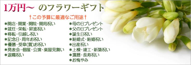 1万円から2万円未満でお選びいただけるフラワーギフト 胡蝶蘭、ミディ胡蝶蘭、観葉植物