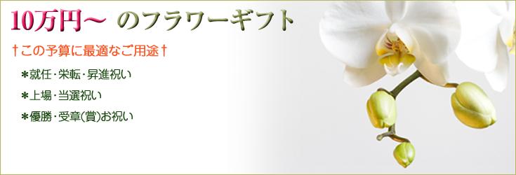 10万円以上からお選びいただけるフラワーギフト 胡蝶蘭、ミディ胡蝶蘭、観葉植物
