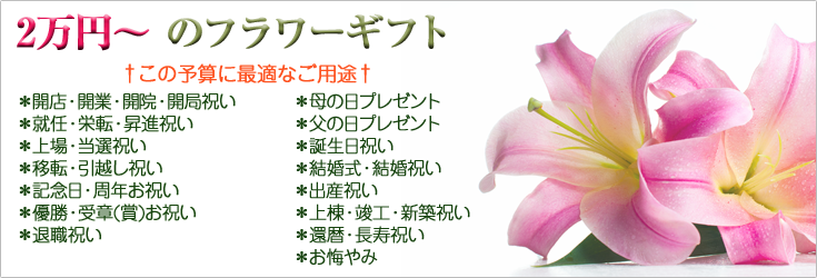 2万円から3万円未満でお選びいただけるフラワーギフト 胡蝶蘭、ミディ胡蝶蘭、観葉植物