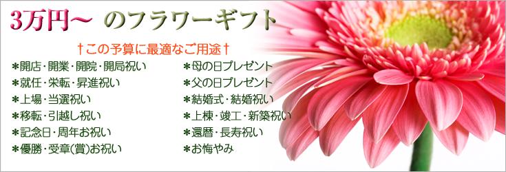3万円から5万円未満でお選びいただけるフラワーギフト 胡蝶蘭、ミディ胡蝶蘭、観葉植物