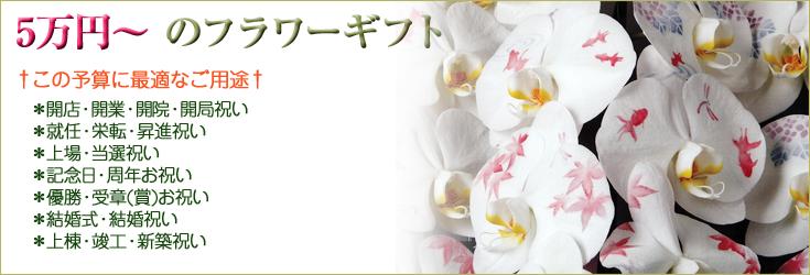 5万円から10万円未満でお選びいただけるフラワーギフト 胡蝶蘭、ミディ胡蝶蘭、観葉植物